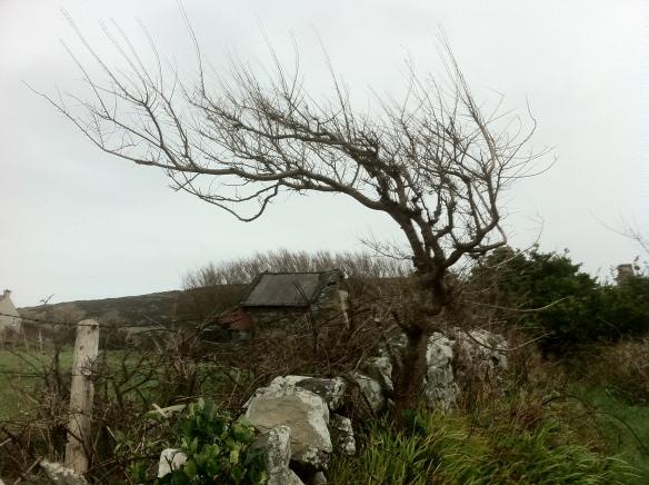 wind-blown-tree.jpg